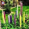 100pcs/bag comune Foxglove Flower Bonsai Semi 100% veri semi di Digitalis Purpurea domestico fiore giardino in vaso pianta facile da coltivare 7 #3