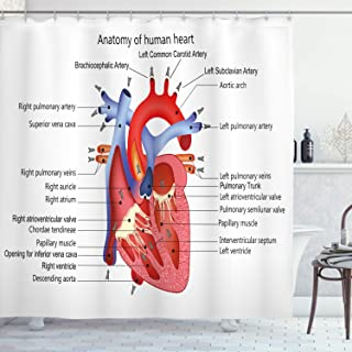 Ambesonne Educational Shower Curtain, Structure of The Heart Human Body Anatomy Organ Veins Cardiology, Cloth Fabric Bathr...
