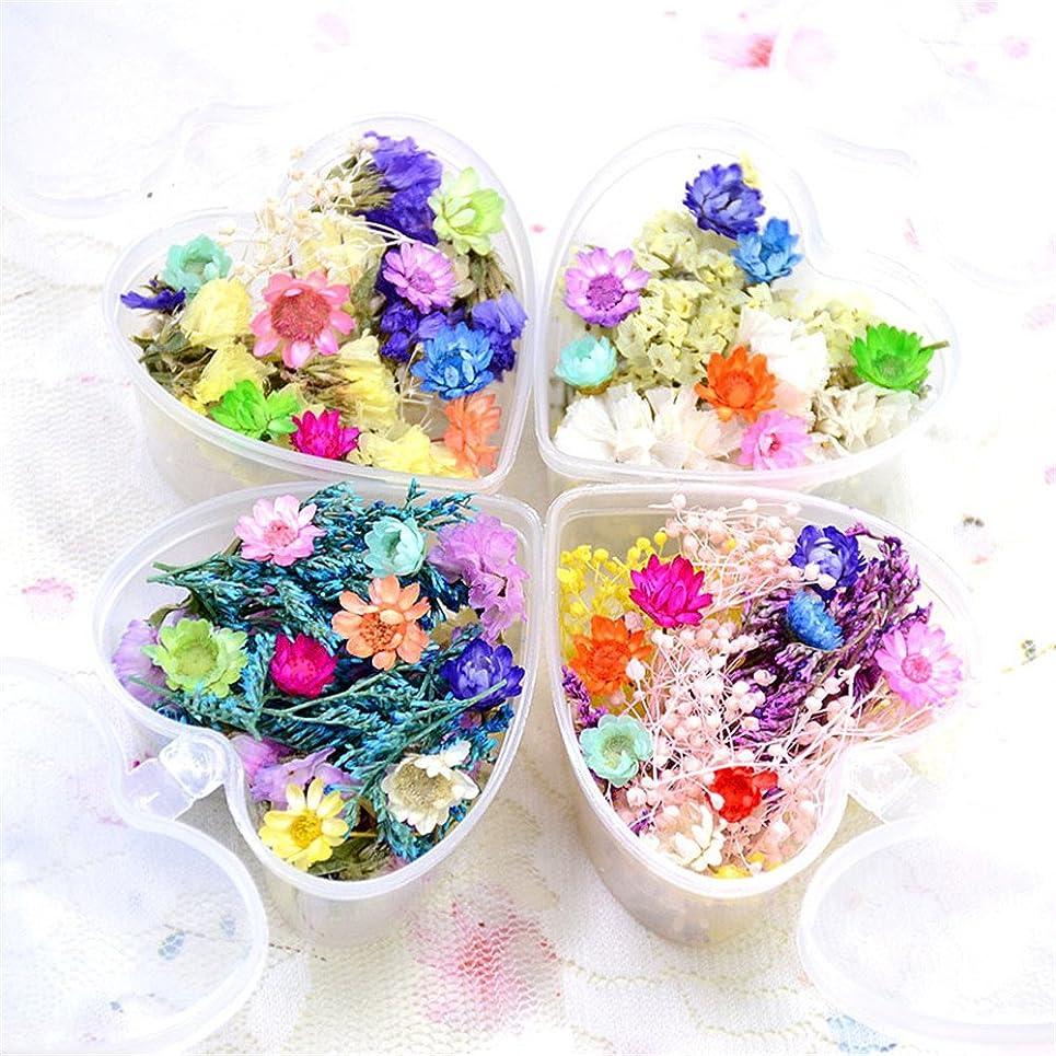マーティンルーサーキングジュニア自分の収入押し花 ドライフラワー 4ボックスセット 3Dネイル レジンデコレーション DIYデコレーション飾り用品 (セット4)