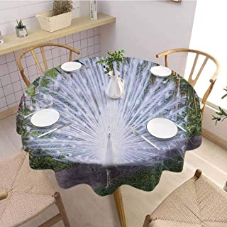 Luoiaax Peacock Waterproof Anti Wrinkle no Pollution Peacock Open His Tail Feathers in Tropical Garden Unusual Birds Nature Ornament Round Tablecloth D67 Inch Round White Green