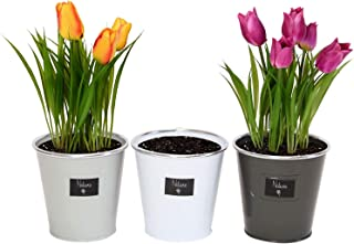 Metal Herbs Planters - Set of Three in Assorted Colors Product SKU: GD229501