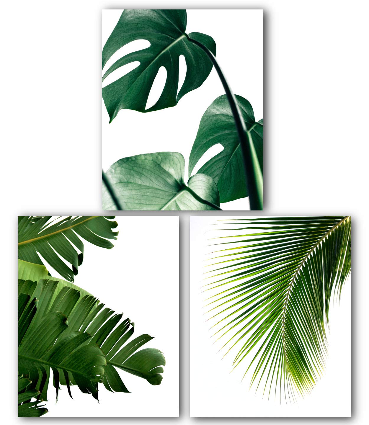 New sales Monstera Banana Free shipping / New Palm Leaf Prints Set 8 Tropical Of 3 Leaves