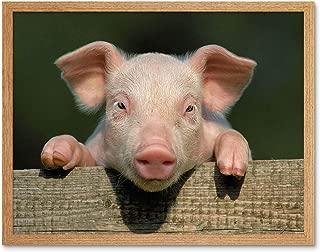Best cute baby pig photos Reviews