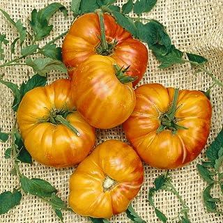 Tomato Pineapple 15+ Seeds Heirloom Vegetable Garden Huge 450-900g Giant Fruit