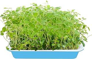 MOEGEN Bandejas de Semillas germinadas, 4 Piezas semilleros germinacion Hidropónica Bandeja de para la Oficina en casa jardín
