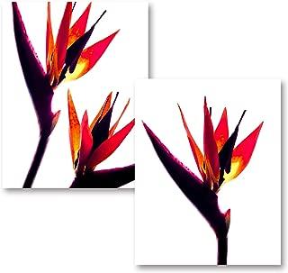 Gango Home Decor Bird of Paradise | Gorgeous Bird of Paradise Silhouette Photograph Print; Two 11x14 Poster Prints