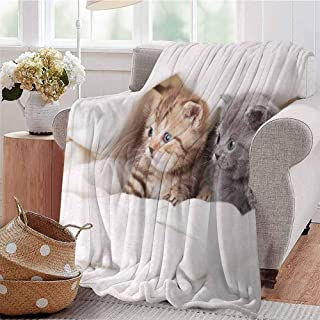 CRANELIN Summer Comforter Blanket Two Little Scottish Fold Kittens on The White Background Digital Artwork Print White and Grey Dorm Bed Baby Cot Traveling Picnic W54 xL84