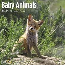 2020 Baby Animals Wall Calendar by Bright Day, 16 Month 12 x 12 Inch, Cute Dog Cat Puppy Kitten Fox Sloth