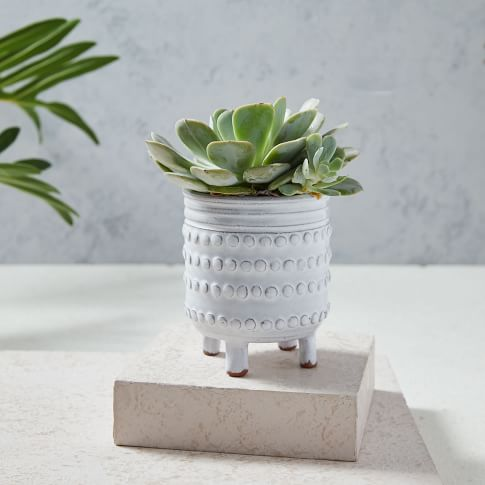 Planters & Terrariums | west elm