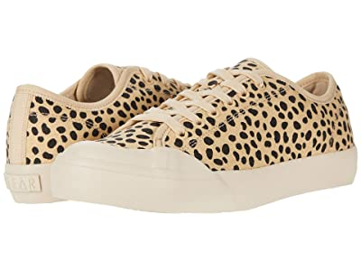 Dolce Vita Bryton (Leopard Eco Print Canvas) Women