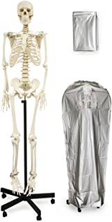 """Vision Scientific VAS201-DC Medical Grade Full Size Human Skeleton-66"""" W Zip Dust Cover 