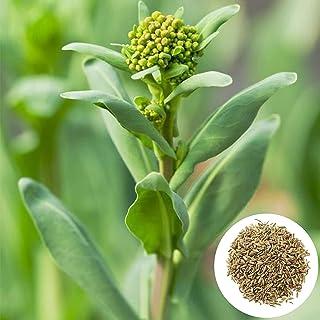 Amazon.es: Bolsas De Algodon - Plantas, semillas y bulbos: Jardín