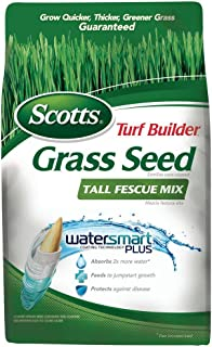 Best turbo tall fescue Reviews