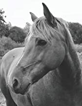 Wild Horse in Pasture Blank Sheet Music: For Musicians, Songwriters, & Composers