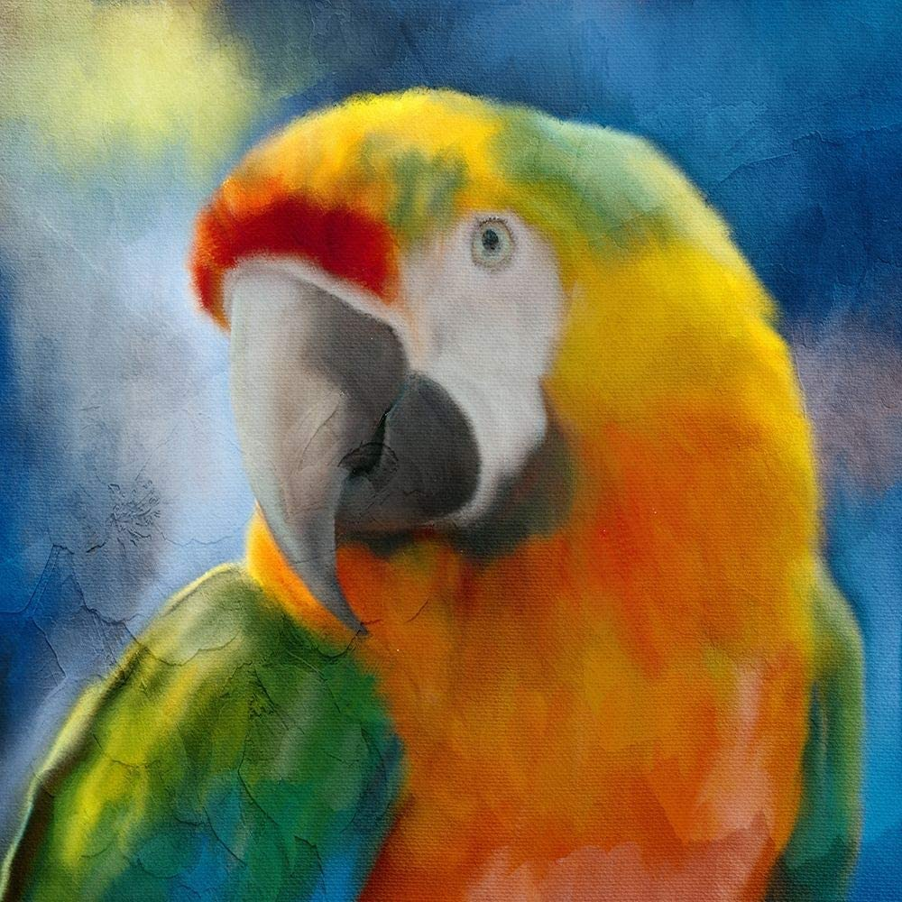 Posterazzi PDXKASQ1996SMALL Parrot Love Large discharge sale Poster Allen Kimberly Over item handling Pr