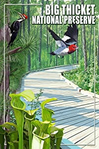 Big Thicket National Preserve, Texas (12x18 Art Print, Wall Decor Travel Poster)