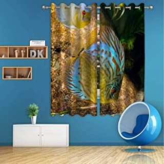 ALUONI Discus Fish in Aquarium Digital Art Print Polyester Window Curtains,126835 for Bedroom,55 in Wide x 45 in high