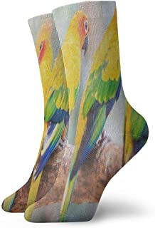 Crew Socks Hipster Conure Parrot Bird Vintage Mens Casual Stocking Holiday Sock Clearance for Woman