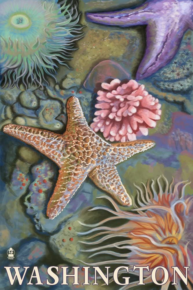 Washington - Product Tidepool Special price 36x54 Giclee Tr Gallery Wall Print Decor
