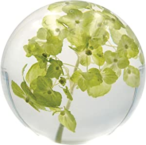 Dynasty Gallery FloraCulture Paperweight Chartreuse Hydrangea