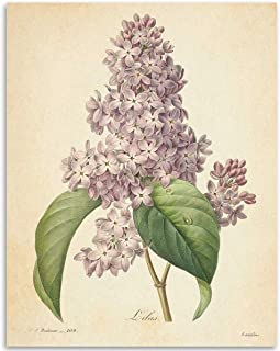 Vintage French Lilac Flower Botanical - 11x14 Unframed Art Print - Great Gift and Decor for Gardeners Under $15