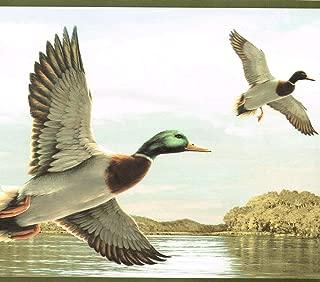 mallard duck wallpaper