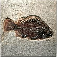CafePress - Fish Fossil Art - Tile Coaster, Drink Coaster, Small Trivet