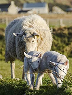 Gifts Delight Laminated 24x31 inches Poster: Sheep Lamb Spring Agriculture Wool Livestock Green Grass Ewe Pasture Mother Farming Baby Ram Young Cute