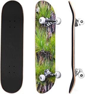 Classic Concave Skateboard Volcanic rock formation Fog and Canary pine forest in La Cumbrecita Canadian Maple Trick Skateb...