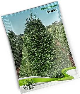 Abies Fraseri (Fraser Fir) - 10 Seeds