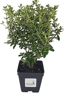 Best cheap bonsai trees online Reviews