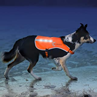 Illumiseen LED Dog Vest | Orange Safety Jacket with Reflective Strips & USB Rechargeable LED Lights | Increase Your Dog's Visibility When Walking, Running, Training Outdoors | with Straps & Buckles