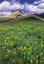 Posterazzi Mt. Cirque Wildflowers In The Helen Creek Valley Banff National Park Alberta Canada. Poster Print (11 x 16)
