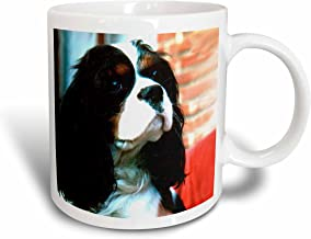 3dRose Cavalier King Charles Spaniels Mug, 15-Ounce