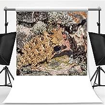 Close up of a Coast Horned Lizard Phrynosoma Coronatum Blending with a Terrain Theme Backdrop Cartoon Backdrops Photography Backdrop,029851,10x20ft