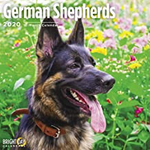 2020 German Shepherds Wall Calendar by Bright Day, 16 Month 12 x 12 Inch, Cute Dogs Puppy Animals Working Rescue Police Canine