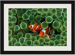 Marine Fish - Art Print Wall Black Wood Grain Framed Picture(24x16inch)
