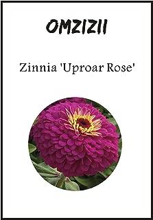 100pcs Zinnia 'Uproar Rose' Half-Hardy Flower Seeds Home Garden Bonsai Seeds DIY