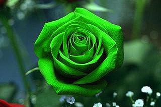Bellas semillas de flor rosa verde 80 semillas -BUY 4 ARTÍCULOS