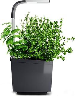 Tregren LED Mini huerto, Gris, T3 : 3 plantes