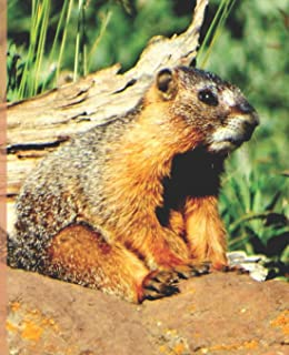 Cute Baby Marmot Rocky Mountain Wildlife Photograph Wide-ruled School Composition Lined Notebook Sandy Closs: Wide-ruled Lined ... Covers: Fun School Supplies & Stuff)