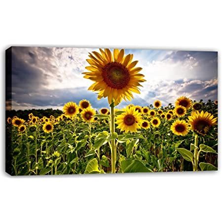 Sunset On Sunflower Field Canvas Xxl Huge Pictures Completely Framed With Stretcher Art Print On Wall Picture With Frame Cheaper Than Oil Paintings And Picture No Poster Or Poster Size 100x70 Cm
