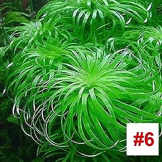 2バッグプレミアム水族館水生植物の種子、1000ピース/バッグ水草種子用ホームガーデンフィッシュタンク装飾、簡単に育てる