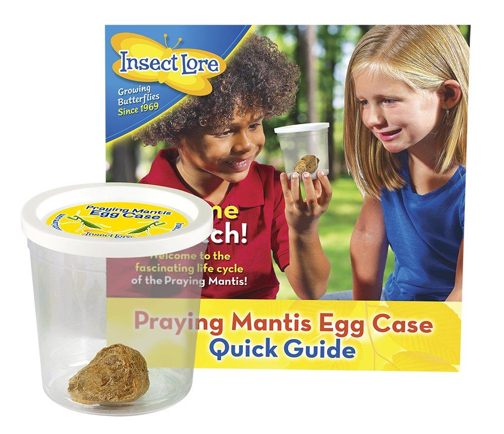 Amazon Com Insect Lore Praying Mantis Egg Case Kit Toys Games