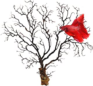 Natural Aquarium Sea Fan by SunGrow - Dramatic Piece of Aquarium Décor - Great for Fish Tanks,  Terrariums,  Plant Tanks,  Art Projects,  Wall Decor