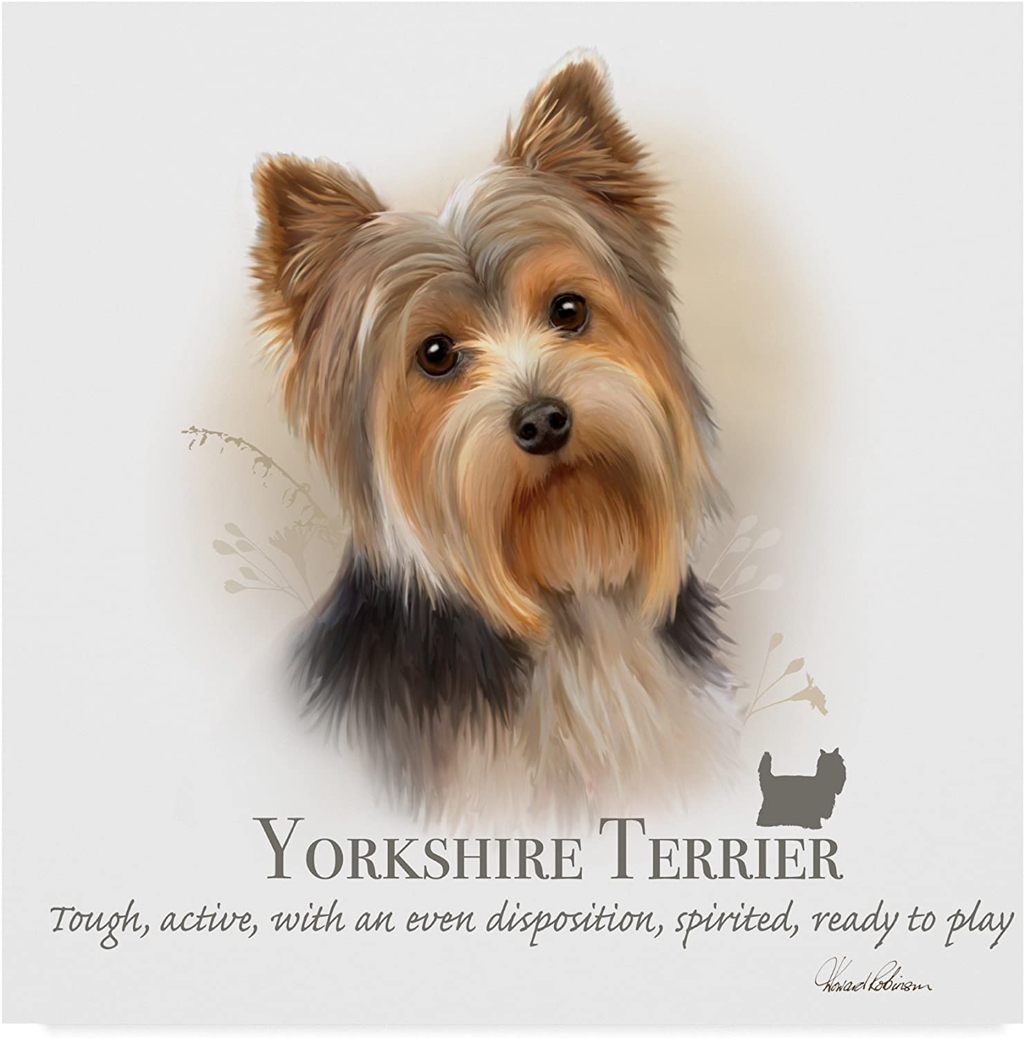 Yorkshire Terrier by Howard Robinson, 14x14-Inch