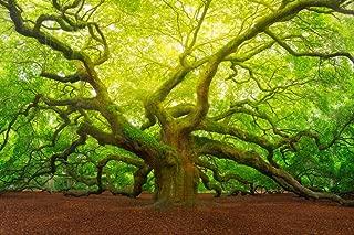 Best oak tree poster Reviews