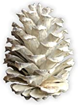 "White Pine Cones - (10) 2.5"" to 4"" Tall Bulk Package Premium, White, Snowy, Frosted Pine cones, and Perfect for Holiday Cr..."