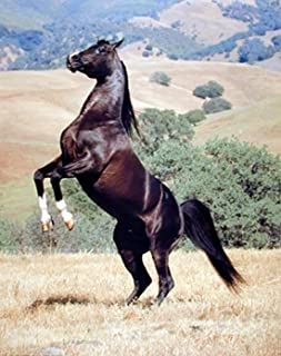 Wild Animal Wall Decor Black Horse Rearing Art Print Picture Posters (16x20)