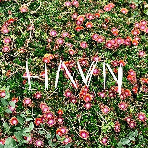 HAVN.